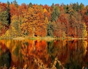fall foliage on trees surrounding a lake